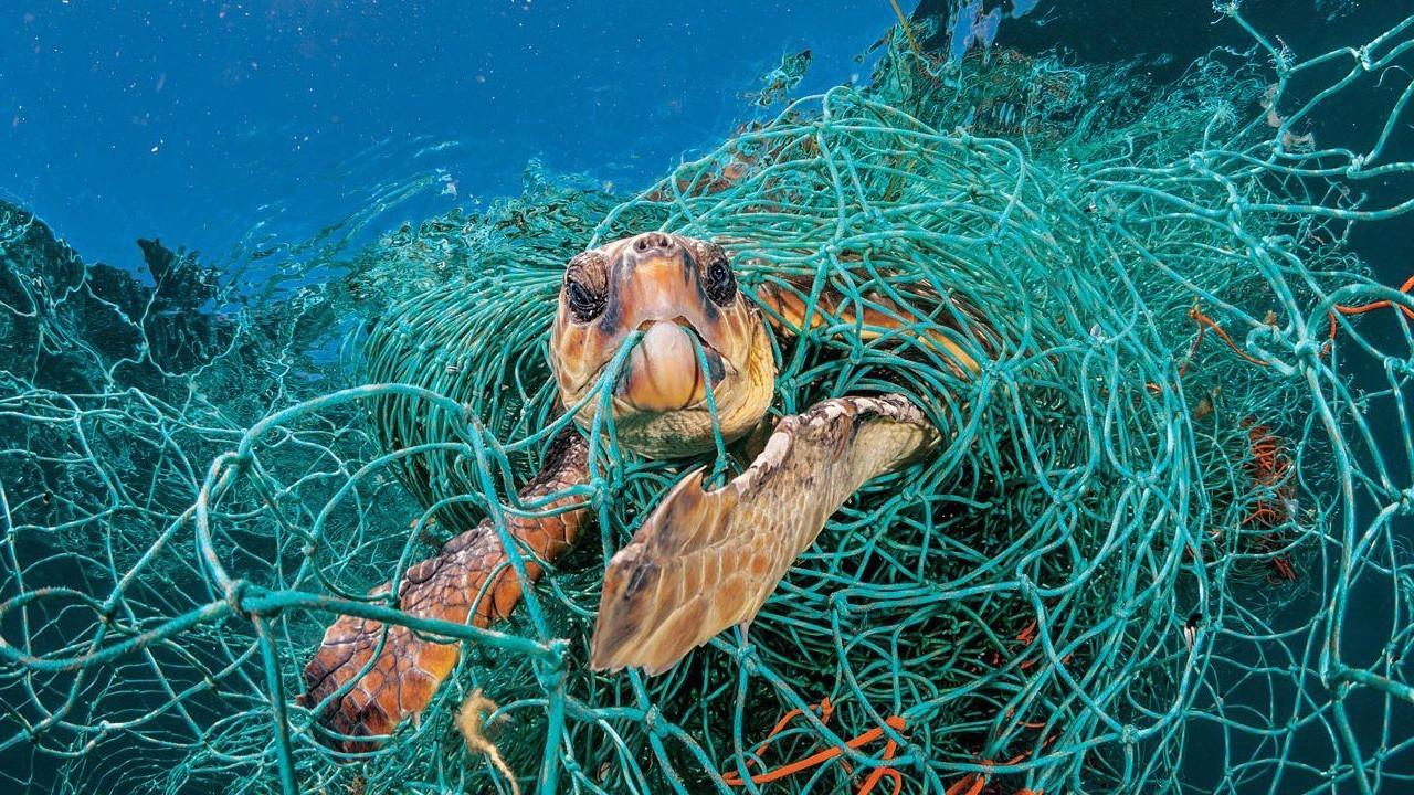 черепаха в рыбацких-сетях