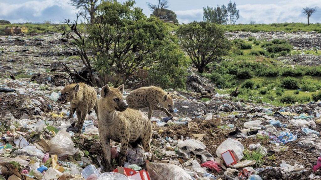 Пластиковая ловушка: фото морских животных, запутавшихся в пластмассовых отходах