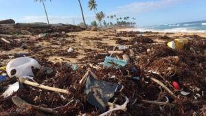 «Пластиковый мир»: исследования учёных.