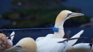 Опасность пластика для птиц: почему птенцы едят пластмассу?
